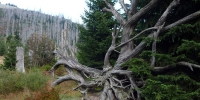 06-Luzny-letni-cesta-pred-zaverecnym-vystupem