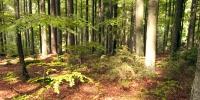 03_Falkenstein_priroda_rozehrava_svetlo_v_lese