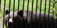 16-bavorsky_les-medved-hnedy