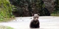 19-bavorsky_les-medvide